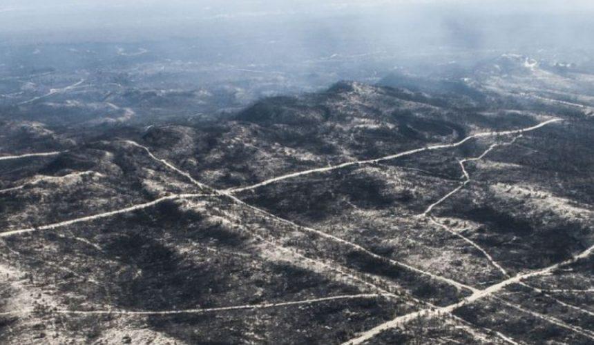 Rotary planta 50 mil pinheiros no Pinhal de Leiria