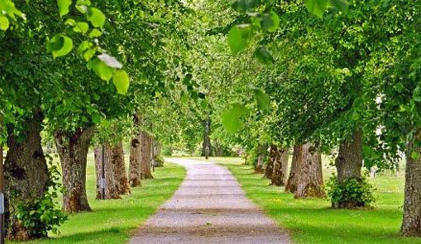 Ainda há tempo para participar no desafio de Ian Riseley de plantar 1,2 milhões de árvores